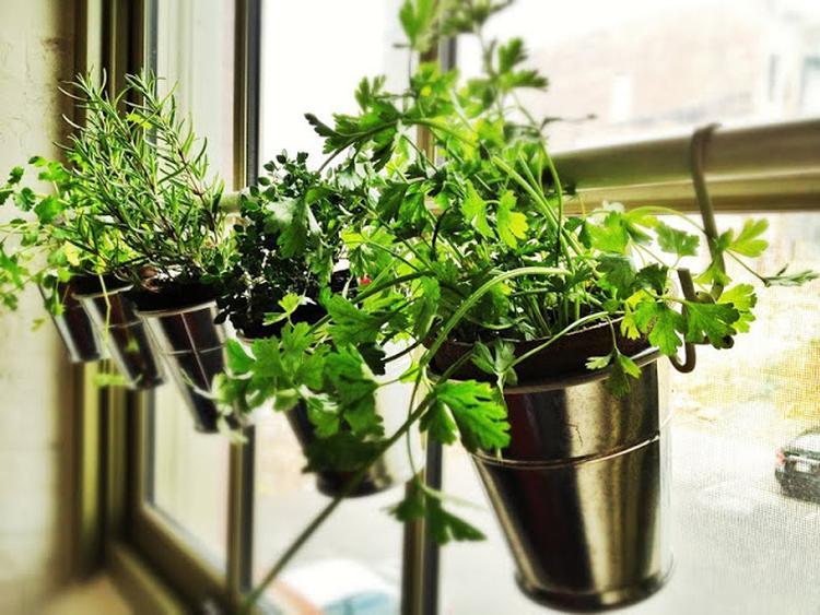 Platzsparender Kräutergarten im Küchenfenster aufhängen. Foto ...