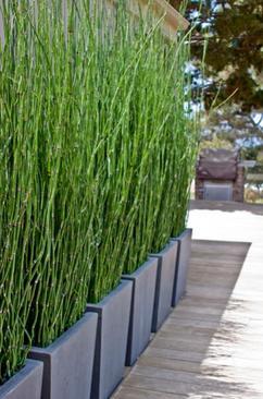 Fotoalbum: Moderner Sichtschutz im Garten, erstellt von FlowerPower ...